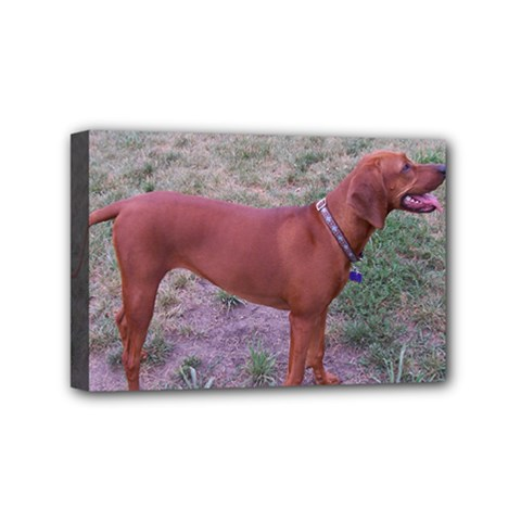 Redbone Coonhound Full Mini Canvas 6  x 4