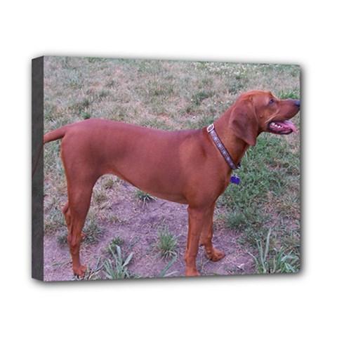 Redbone Coonhound Full Canvas 10  x 8