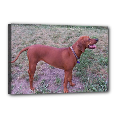 Redbone Coonhound Full Canvas 18  x 12