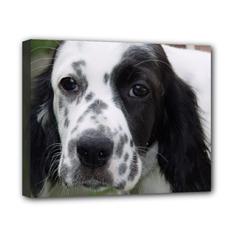 English Setter Canvas 10  x 8