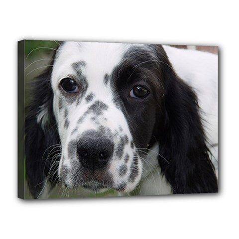 English Setter Canvas 16  x 12