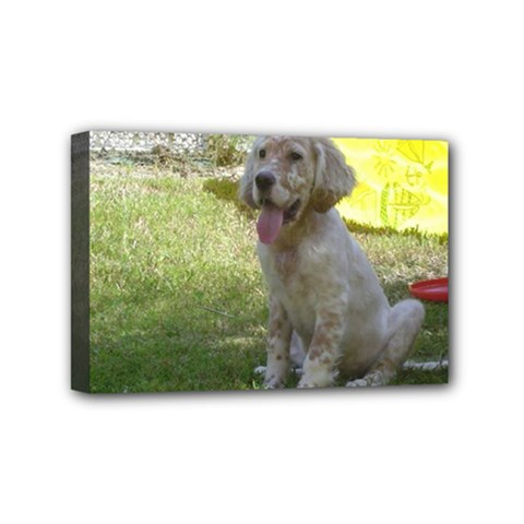 English Setter Orange Belton Puppy Mini Canvas 6  x 4