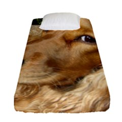 Red Cocker Spaniel Red Fitted Sheet (Single Size)