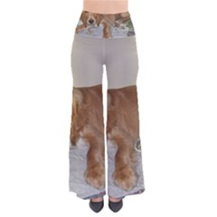 Red Cocker Spaniel Puppy Pants