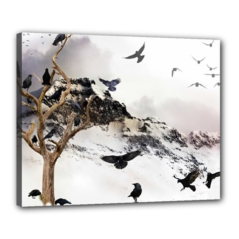 Birds Crows Black Ravens Wing Canvas 20  X 16