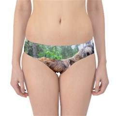 Leonberger Full Hipster Bikini Bottoms
