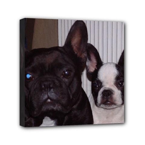 2 French Bulldogs Mini Canvas 6  x 6