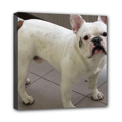 French Bulldog Full Mini Canvas 8  x 8