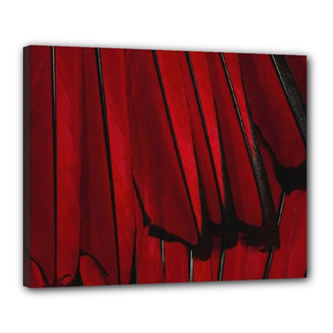 Black Red Flower Bird Feathers Animals Canvas 20  x 16