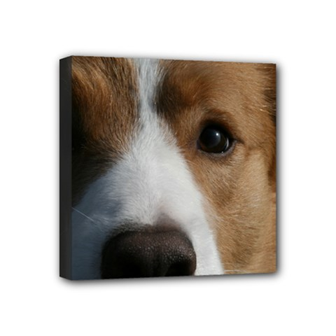Red Border Collie Mini Canvas 4  x 4