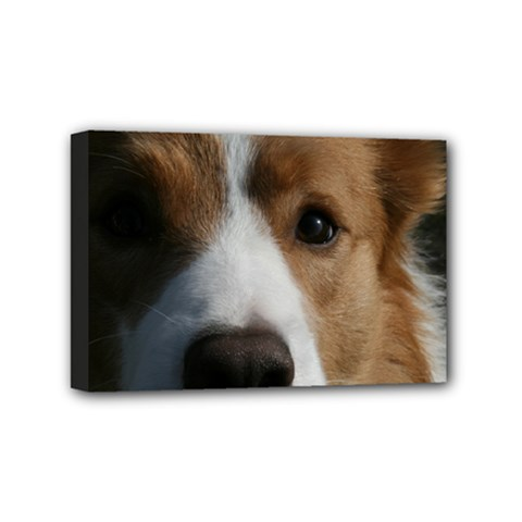 Red Border Collie Mini Canvas 6  x 4