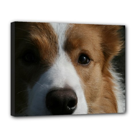 Red Border Collie Canvas 14  x 11