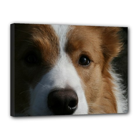 Red Border Collie Canvas 16  x 12