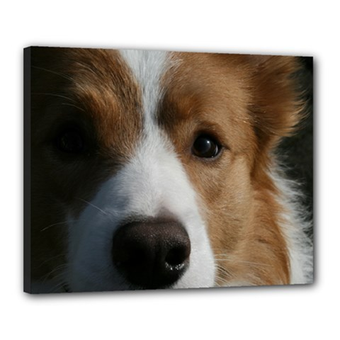 Red Border Collie Canvas 20  x 16