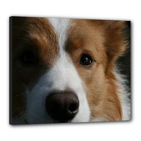 Red Border Collie Canvas 24  x 20