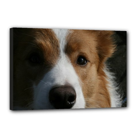 Red Border Collie Canvas 18  x 12