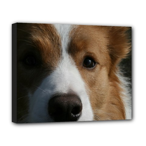 Red Border Collie Deluxe Canvas 20  x 16