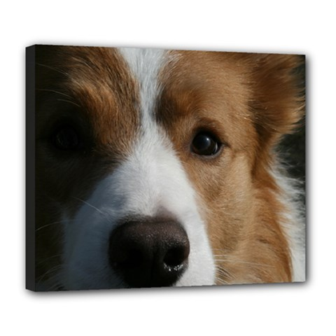 Red Border Collie Deluxe Canvas 24  x 20