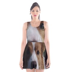 Red Border Collie Scoop Neck Skater Dress