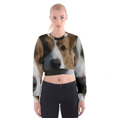 Red Border Collie Women s Cropped Sweatshirt