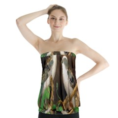 Backdrop Colorful Bird Decoration Strapless Top