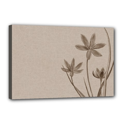 Background Vintage Drawing Sepia Canvas 18  x 12