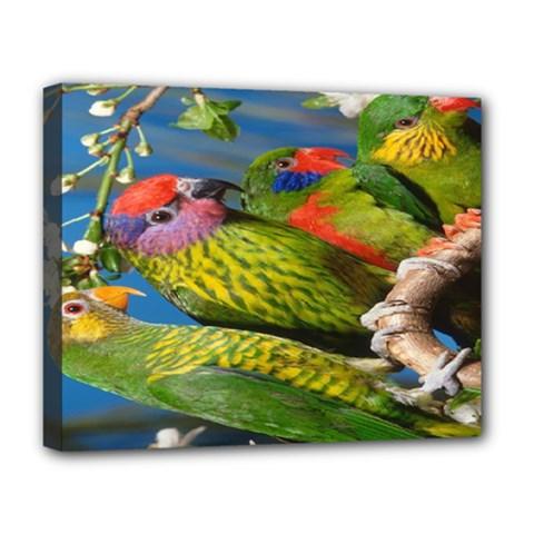 Beautifull Parrots Bird Deluxe Canvas 20  x 16