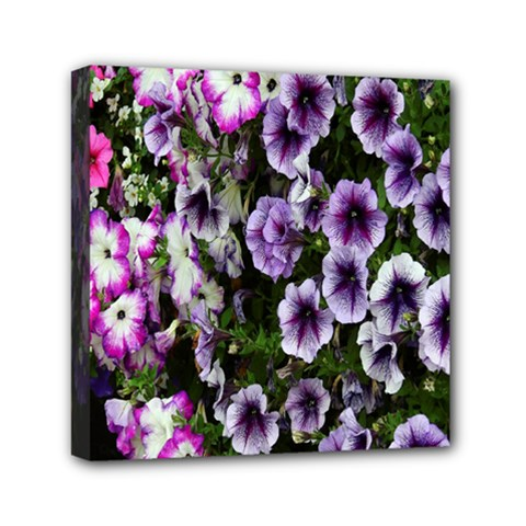 Flowers Blossom Bloom Plant Nature Mini Canvas 6  x 6
