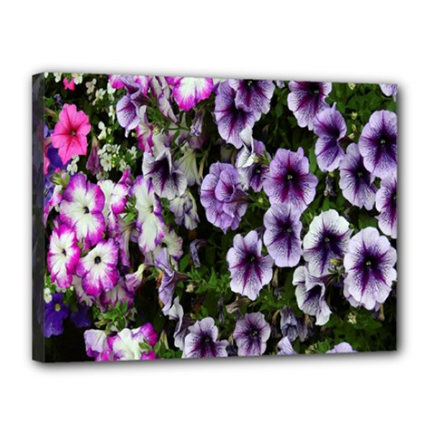 Flowers Blossom Bloom Plant Nature Canvas 16  x 12