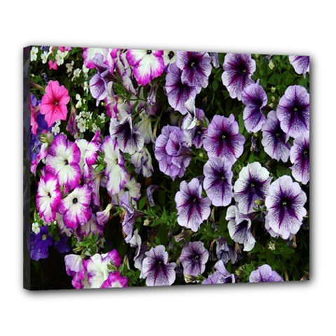 Flowers Blossom Bloom Plant Nature Canvas 20  x 16