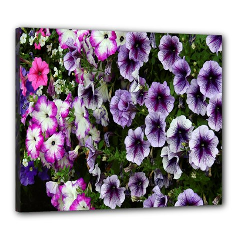 Flowers Blossom Bloom Plant Nature Canvas 24  x 20