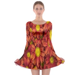 Flowers Nature Plants Autumn Affix Long Sleeve Skater Dress
