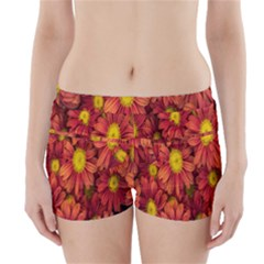Flowers Nature Plants Autumn Affix Boyleg Bikini Wrap Bottoms