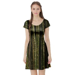 Green And Brown Bamboo Trees Short Sleeve Skater Dress