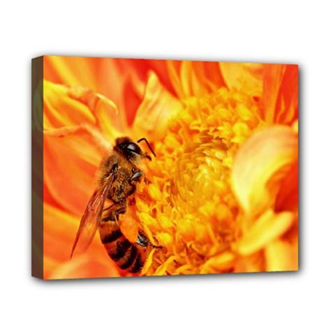 Honey Bee Takes Nectar Canvas 10  x 8