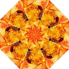 Honey Bee Takes Nectar Folding Umbrellas