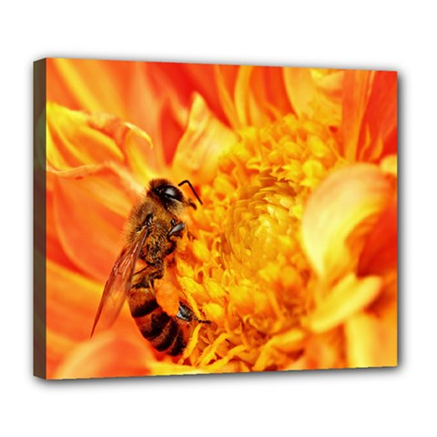 Honey Bee Takes Nectar Deluxe Canvas 24  X 20