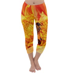 Honey Bee Takes Nectar Capri Winter Leggings