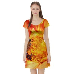 Honey Bee Takes Nectar Short Sleeve Skater Dress