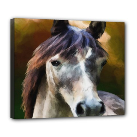 Horse Horse Portrait Animal Deluxe Canvas 24  X 20