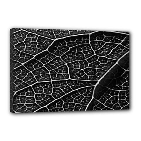 Leaf Pattern  B&w Canvas 18  x 12