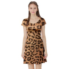 Leopard Print Animal Print Backdrop Short Sleeve Skater Dress
