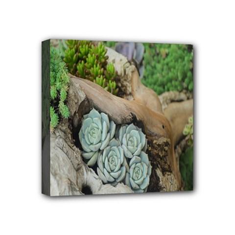 Plant Succulent Plants Flower Wood Mini Canvas 4  x 4