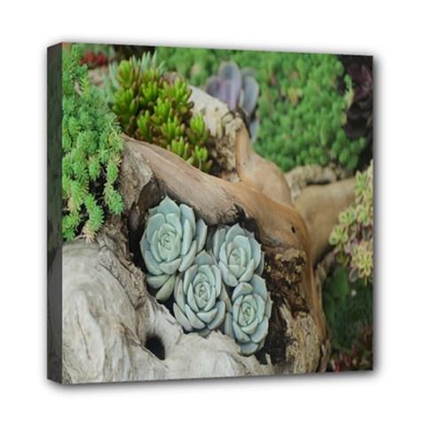 Plant Succulent Plants Flower Wood Mini Canvas 8  x 8