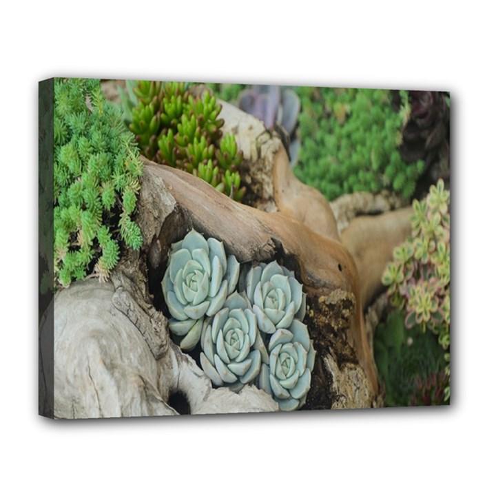 Plant Succulent Plants Flower Wood Canvas 14  x 11
