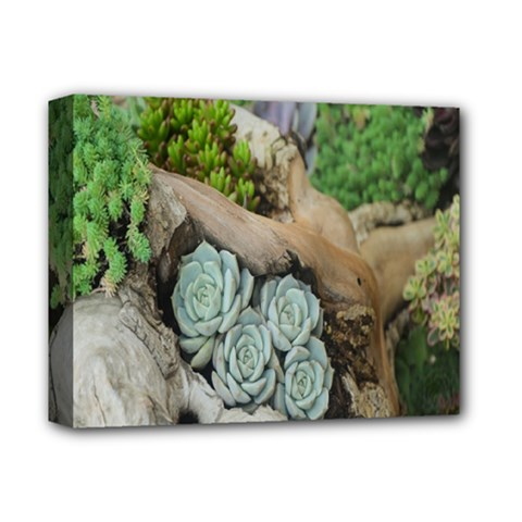 Plant Succulent Plants Flower Wood Deluxe Canvas 14  X 11