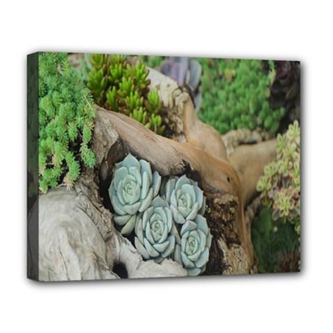Plant Succulent Plants Flower Wood Deluxe Canvas 20  x 16