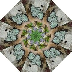 Plant Succulent Plants Flower Wood Golf Umbrellas