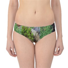 Plant Succulent Plants Flower Wood Hipster Bikini Bottoms