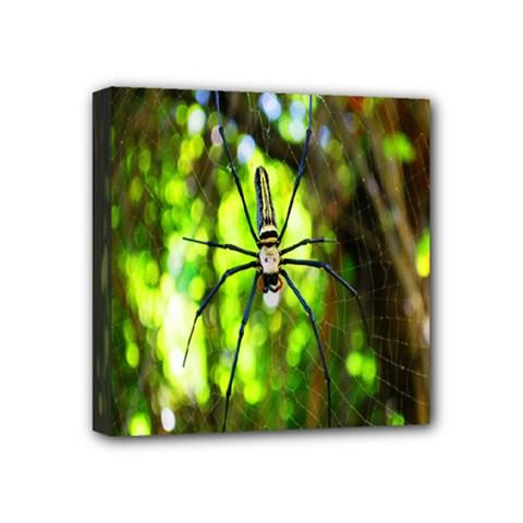 Spider Spiders Web Spider Web Mini Canvas 4  x 4